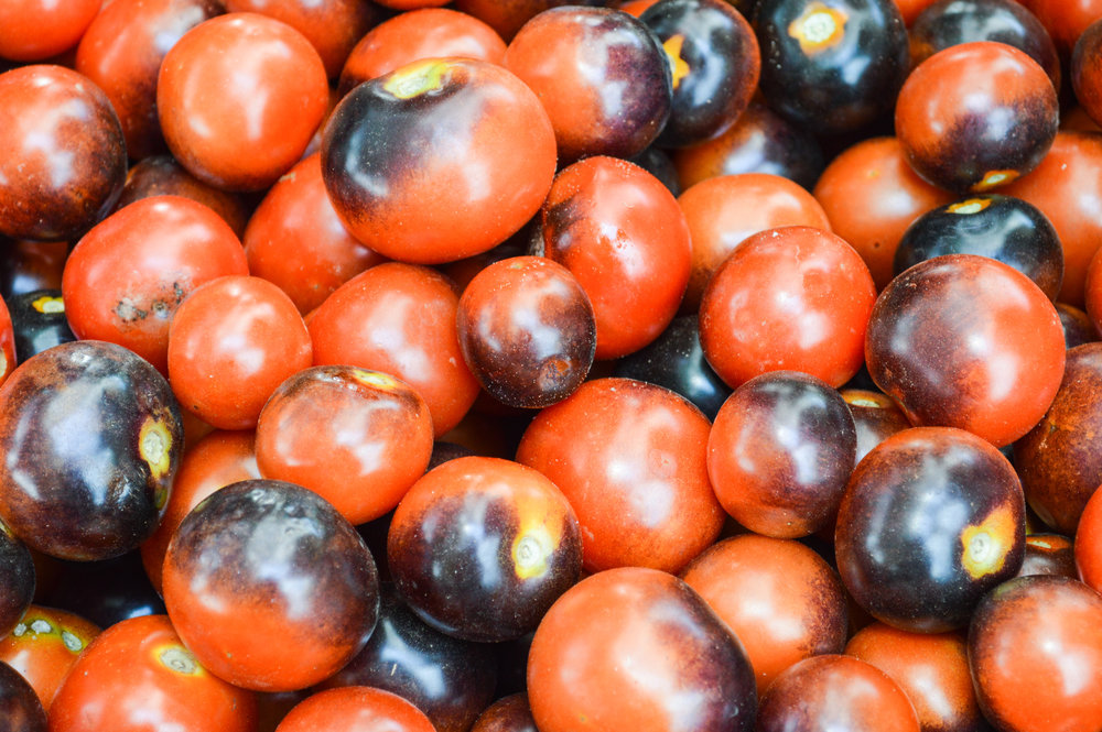 tomatoes spreading oaks cherry size with purple spot.jpg