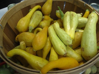 squash in bushel basket.jpg