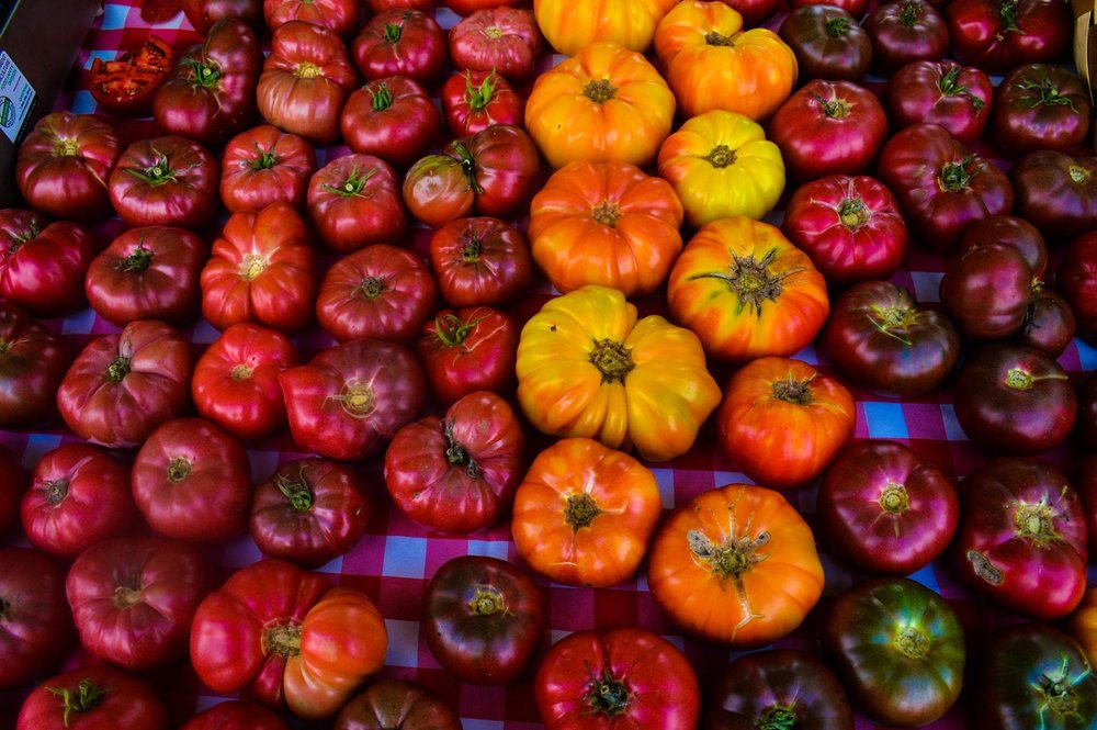 Spreading Oaks Tomatoes in different colors.jpg