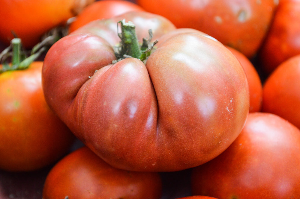 Tomatoe on top of other tomatoes.jpg