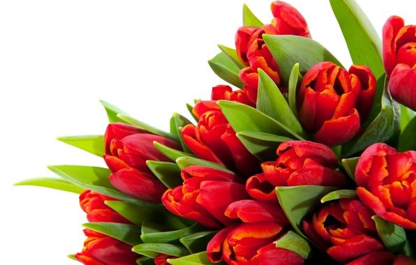 Рассада цветов ИП Харченко.jpg
