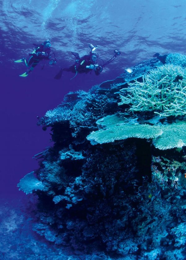Diving on the Great Barrier Reef, picture courtesy of Gettyimages.co.uk / Michael Aw