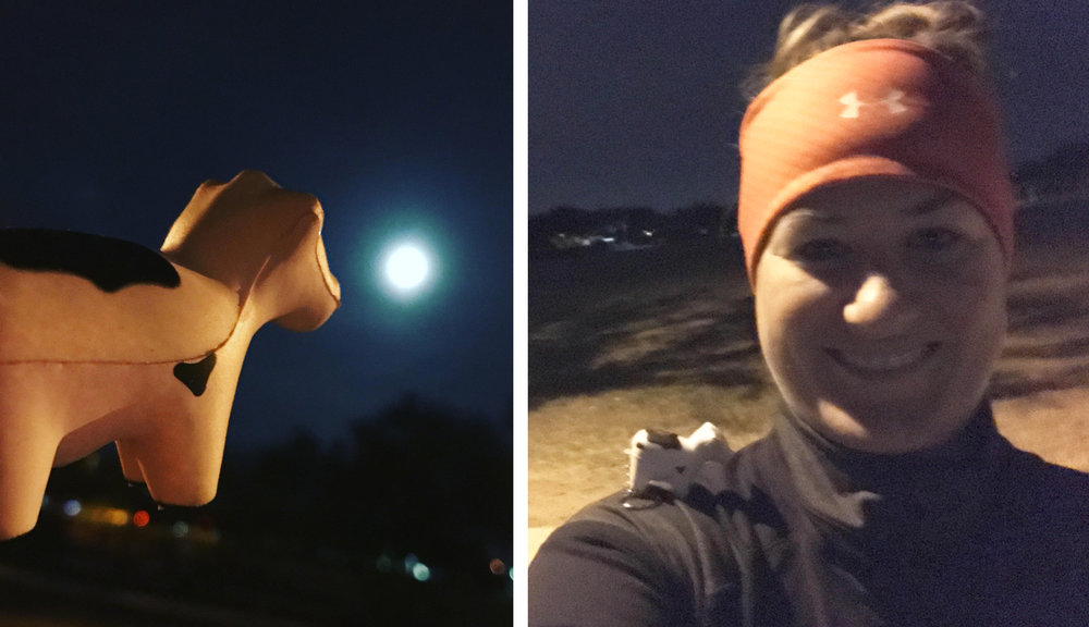 #HeiferBelle howling at the moooon and Heifer Kayloni brought her #heiferBelle with her on this morning's run... where is YOUR #heiferBelle today?