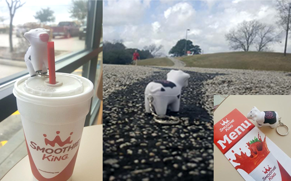 Courtney's #heiferBelle had a smoothie and a nice walk outside today in Texas!