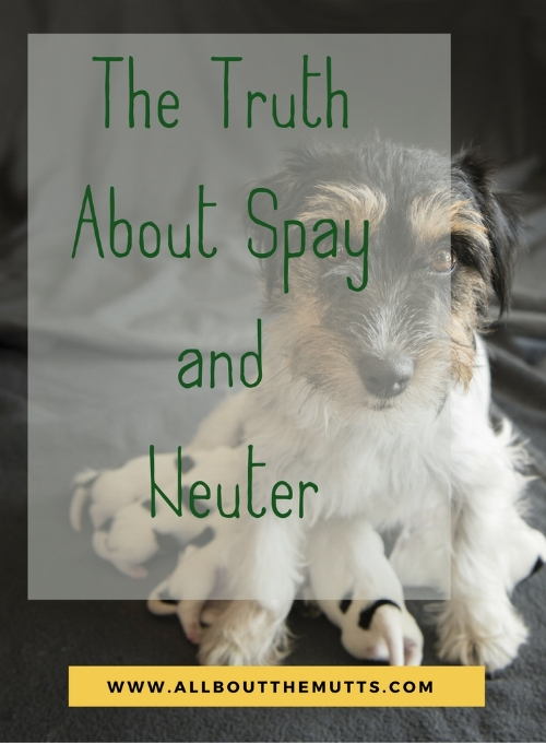 Spay or neuter information for dogs