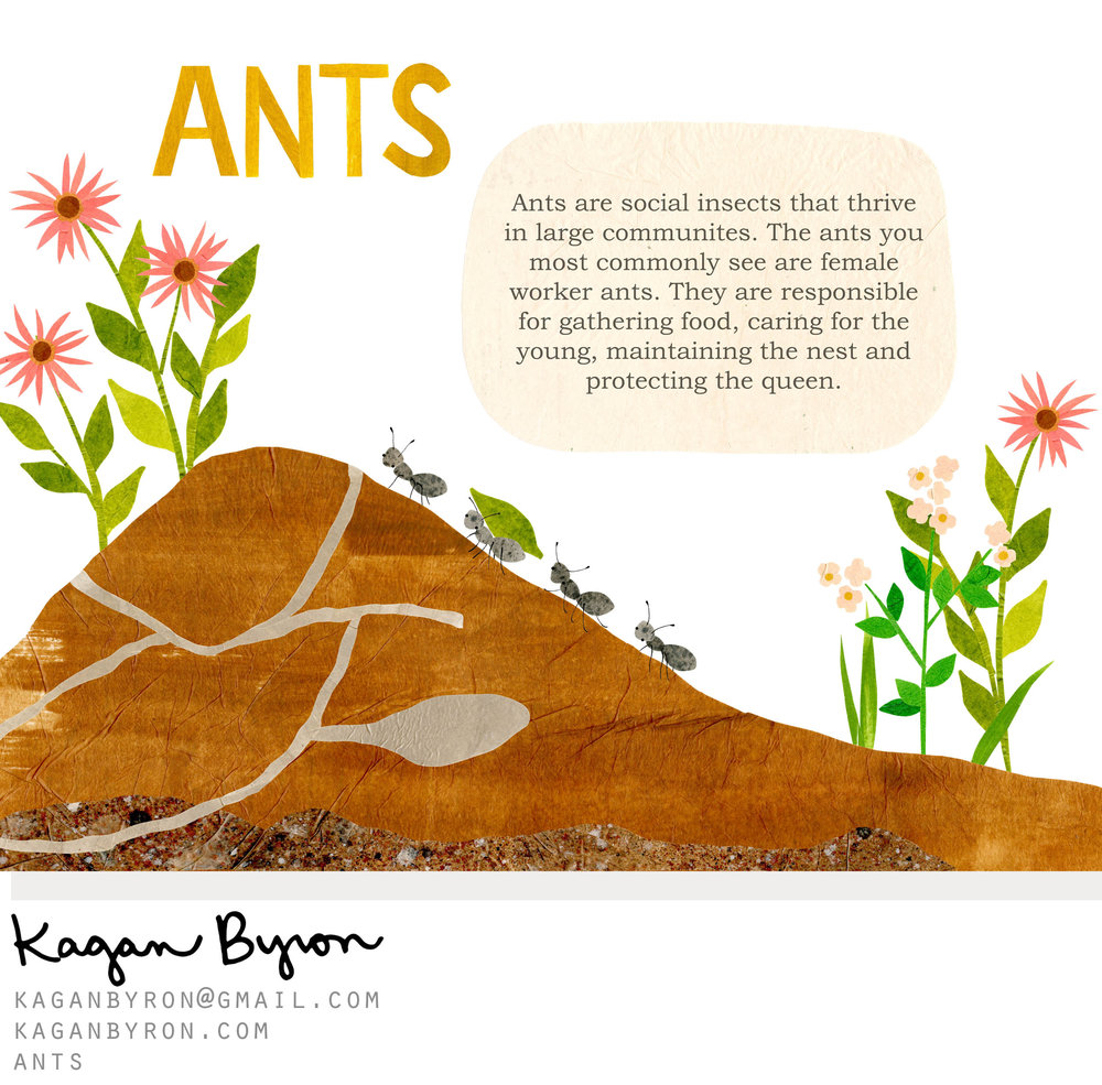 kaganbyron_ants.jpg