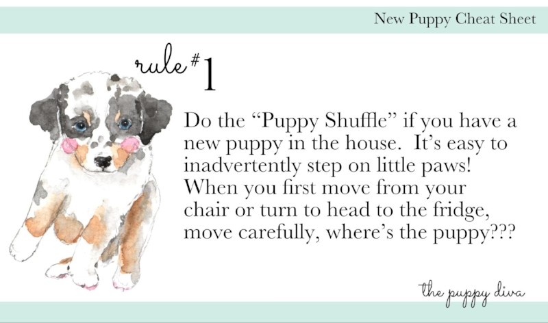 An excerpt from New Puppy 101. (Canvas loves the fun illustrations)