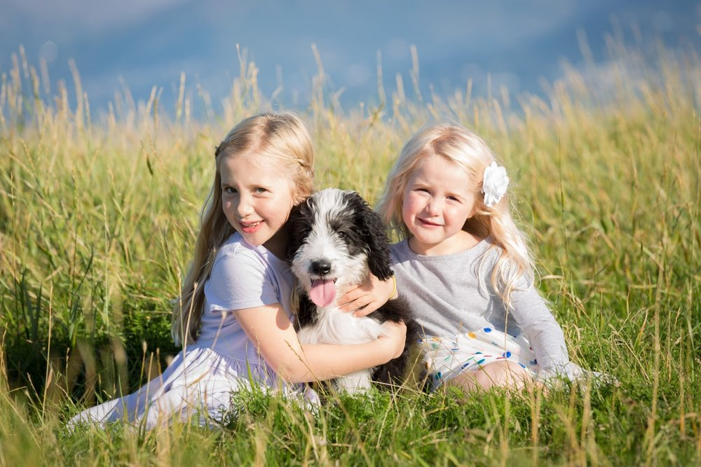 "Here is one of our beautiful Bernedoodle puppies ""Jamboree"" with her adoring young owners (they live in Alaska!)."