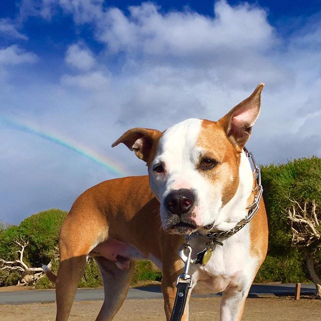 San Diego isn't ALL puppy dogs and rainbows. Oh, wait... 🌈🐶