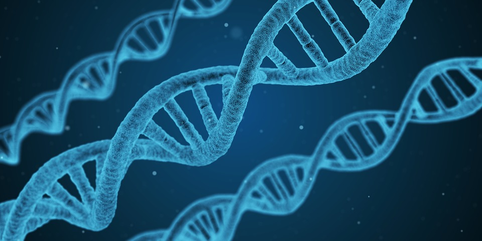 The DNA double helix is the backbone of genetic information.