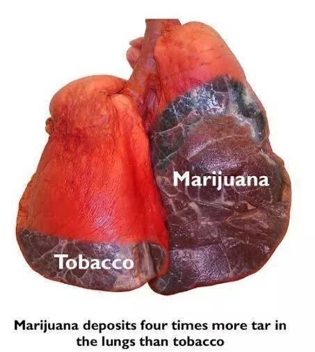 Marijuana_Lungs.jpg