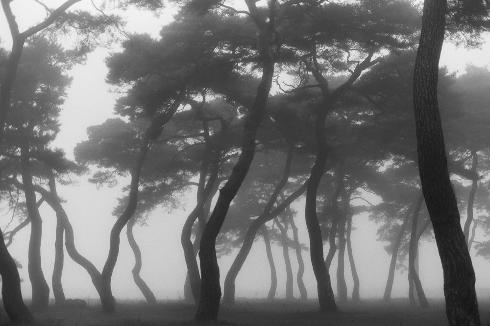 A beautiful misty morning made quite the mood in this South Korea forest.  This picture was taken using black and white film.