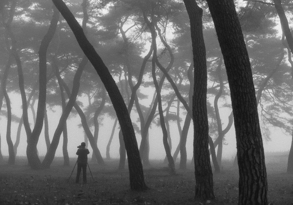 Alone in your thoughts - This photog was deep in concentration finding the right composition for his landscape shot.  This gives you a good perspective of how big these pine forest trees are in South Korea.