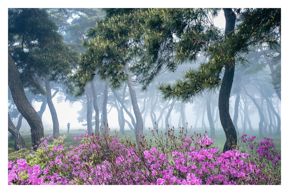 lone-photographer-spring-fog.jpg