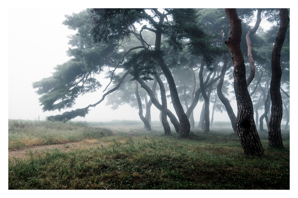 Stroll-Through-The-Forest-Edit.jpg