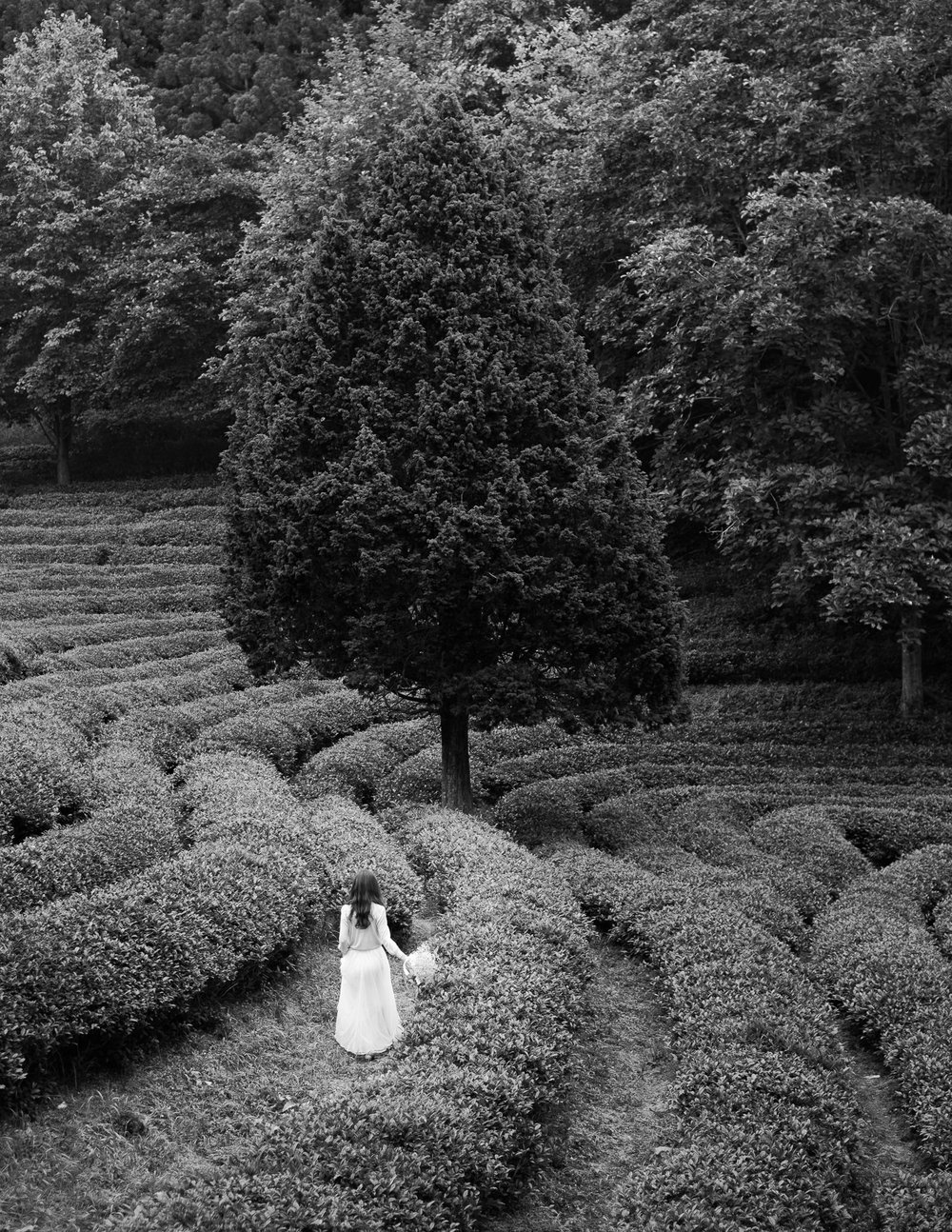 bw-girl-tree-green-tea-fields-korea.jpg