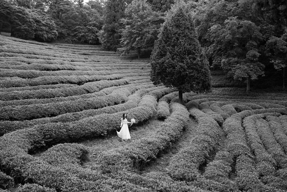 bw-tea-fields-asia.jpg