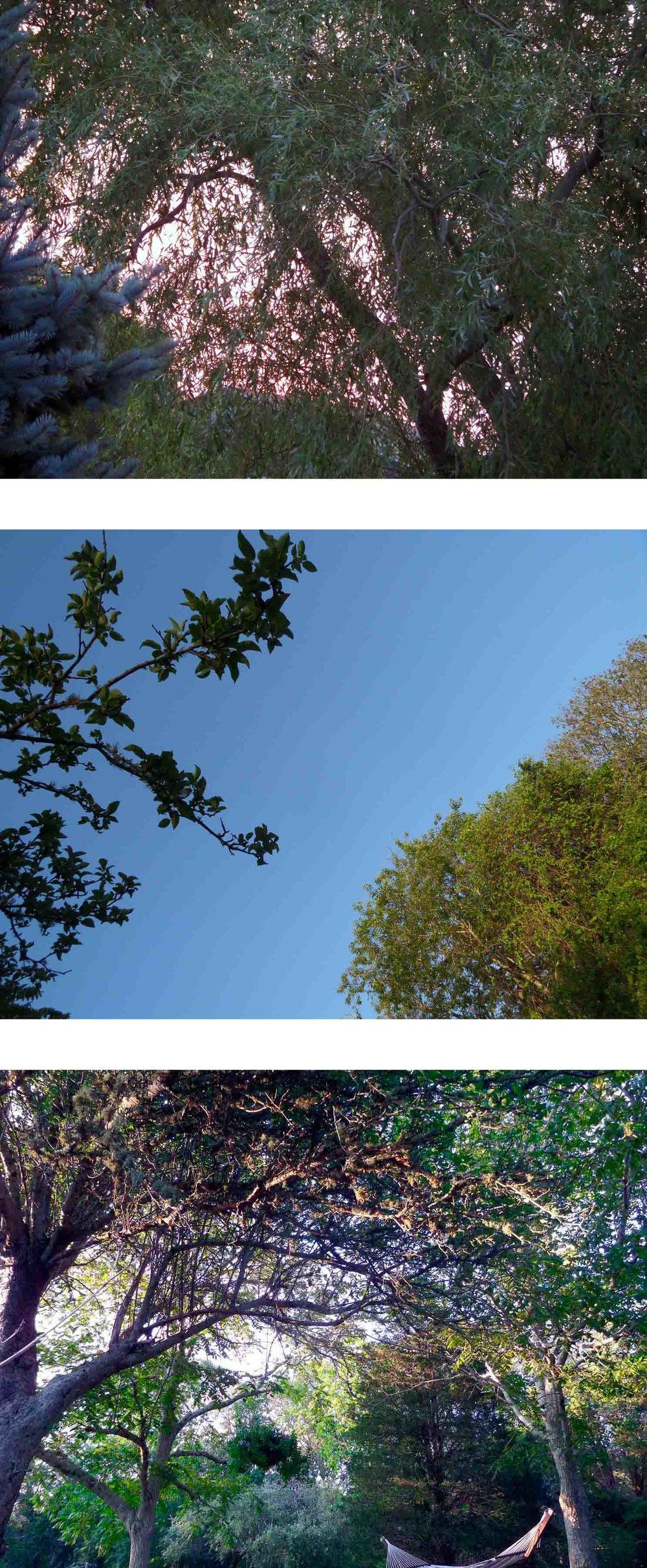3-strip-trees-jennwood.jpg