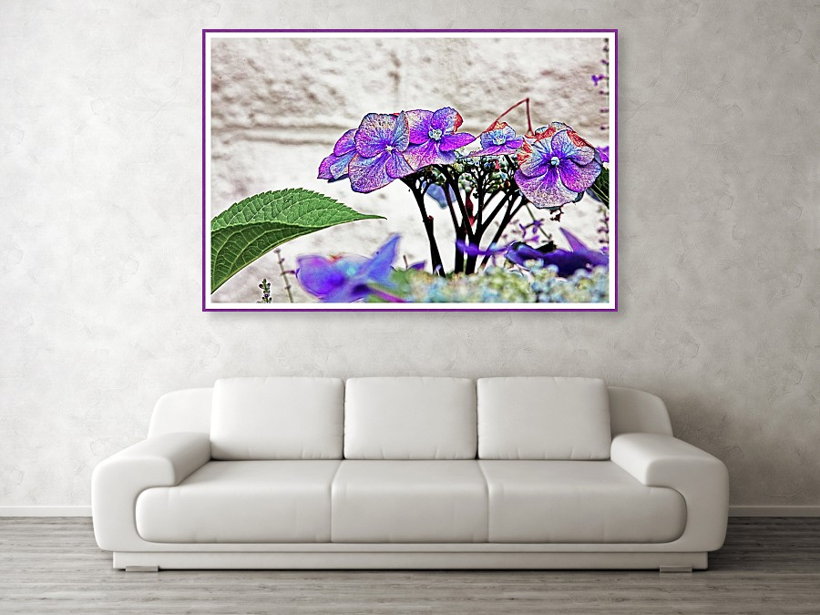 summer-violet-hydrangea-jacques-polanco.jpg