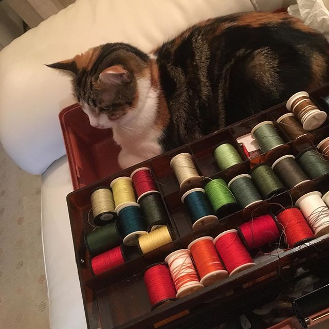 On last stitched piece for K&S and I have a little helper! 🐱 💜 🐱 #cat #kitty #cats_of_world #cats_of_instagram #catlife #catstagram #purr #sewing #stitching #cotton #silk #threads #embroidery #stitch #handstitch  #textiles #fiber