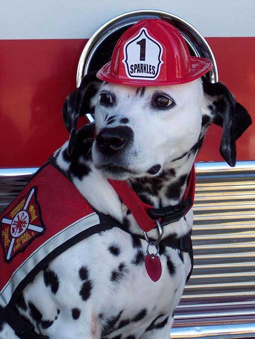 """""""Sparkles, the Fire Safety Dog"""" by Firefighter Dayna Hilton"""