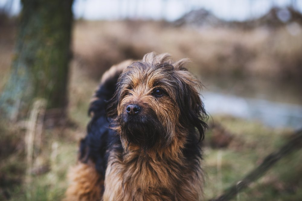 It can be tricky to spot skin conditions on dogs with longer coats, so make sure to check them over every few days for infection, fleas and sores.