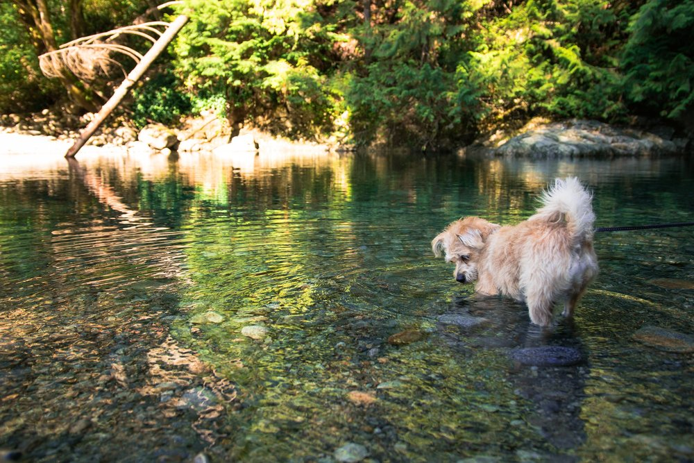 Dogs love a swim, but it's our responsibility to check the water is safe for our furry friends.