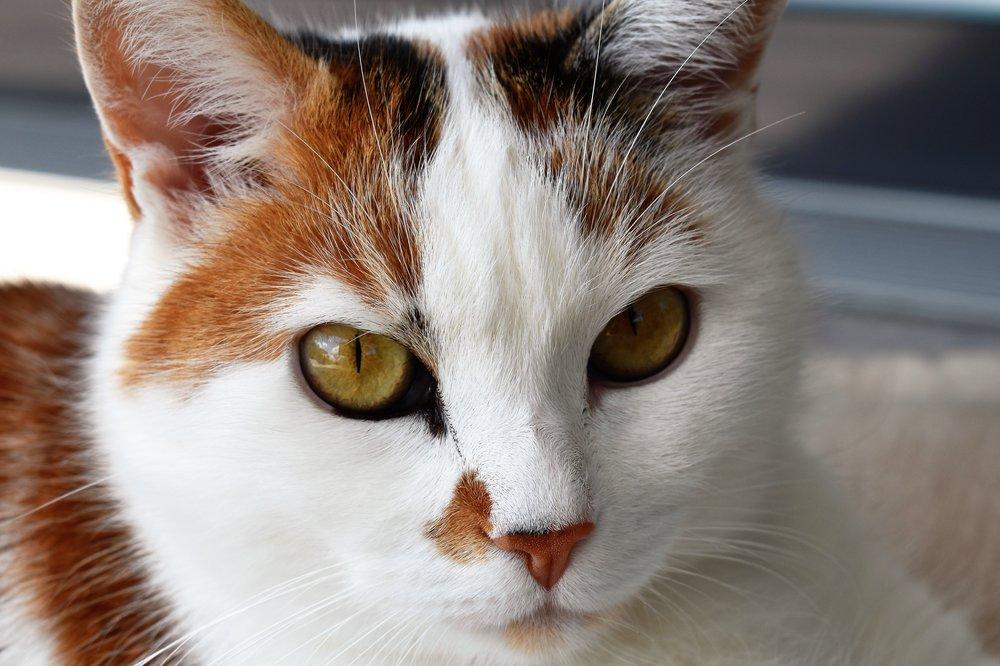 cat-close-animal-cat-face-162309.jpeg