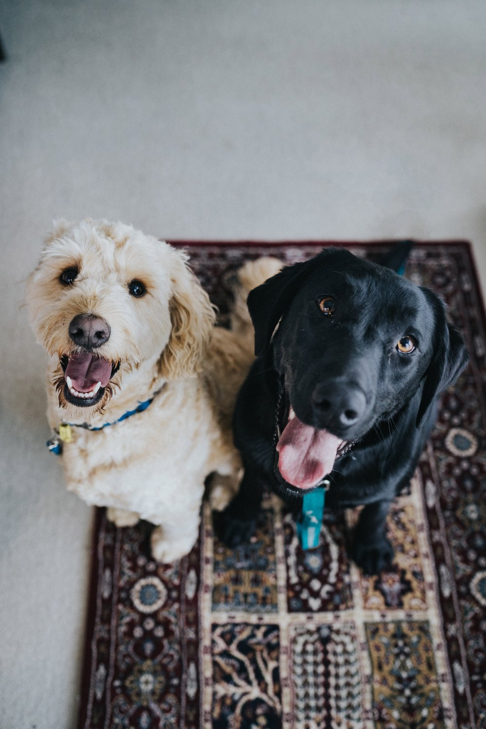 Is it true puppy love, or did they just see the treats come out?