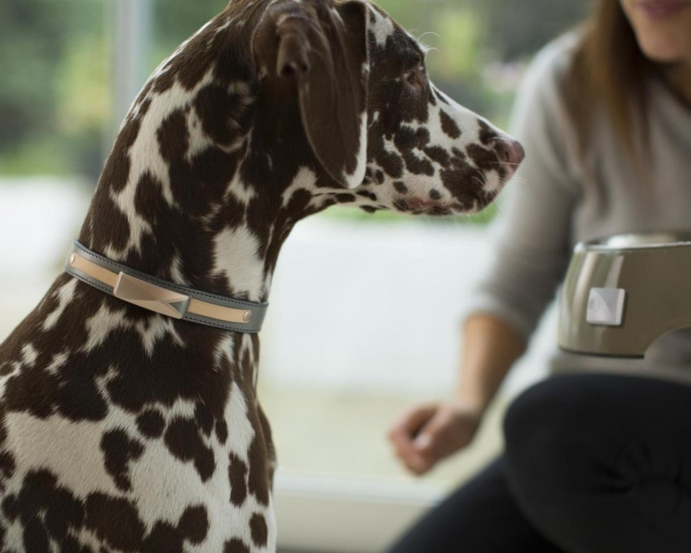 Use the  Felcana Kit  to monitor your dog's eating and drinking patterns, keeping an eye on their diabetic symptoms.