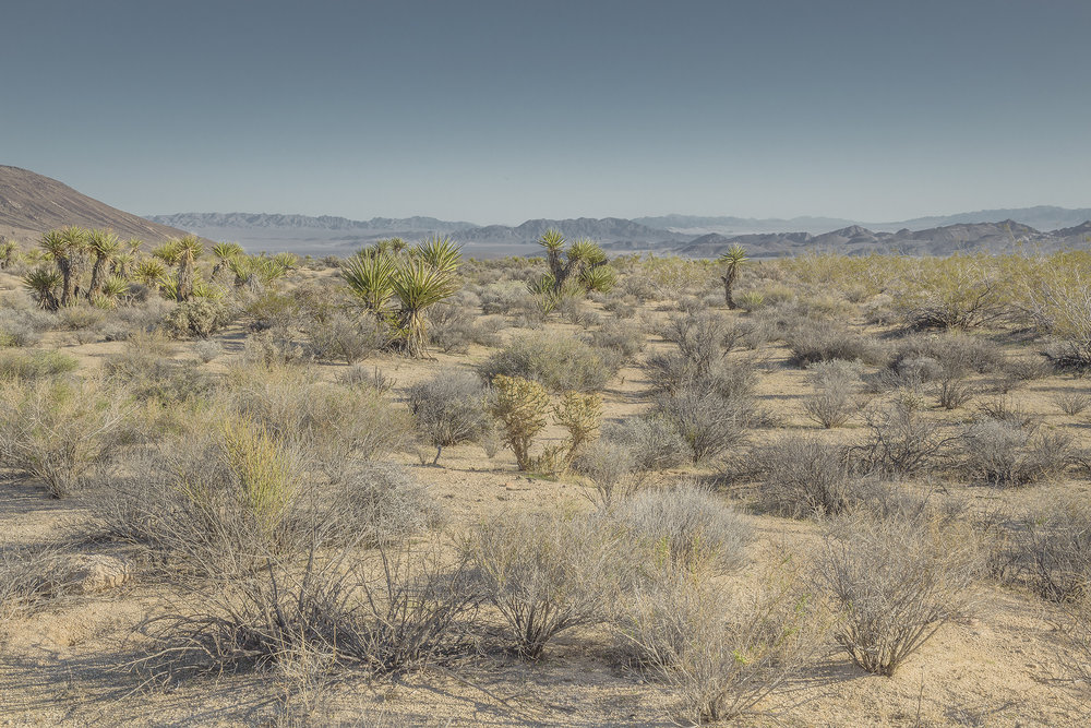 american landscapes #21