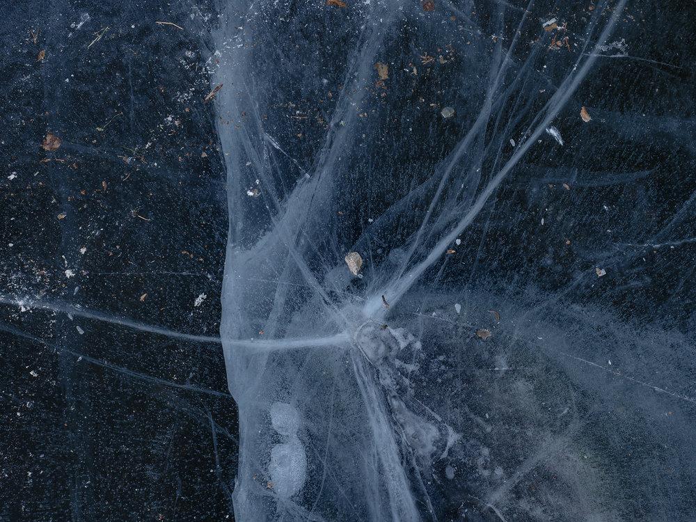 cosmos_C280244.jpg