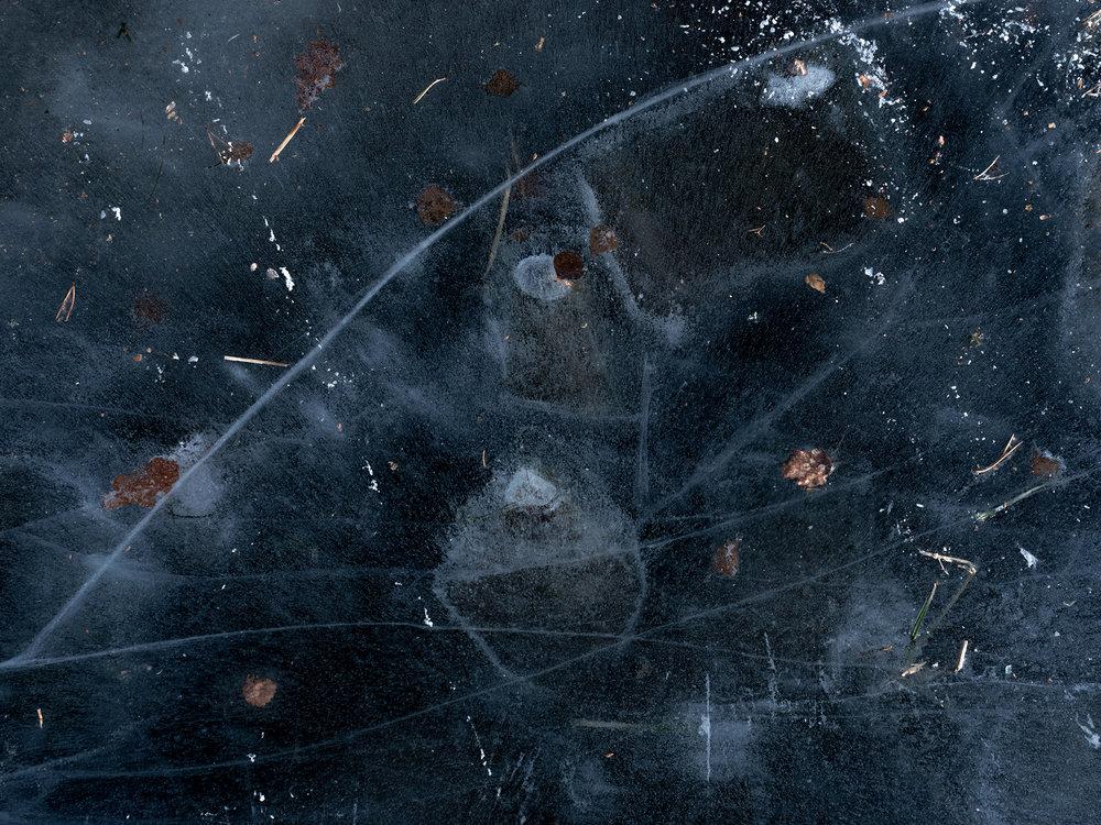cosmos_C280537.jpg