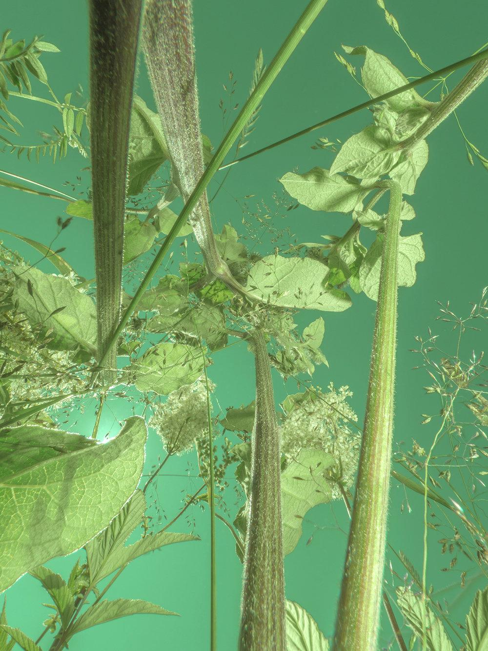 botanical_TP51555.jpg