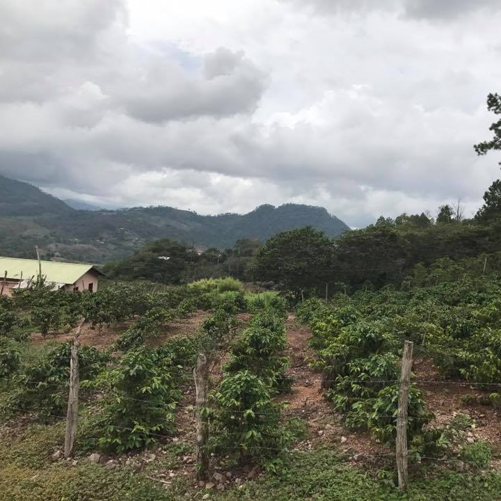 Coffee farm with a beautiful view