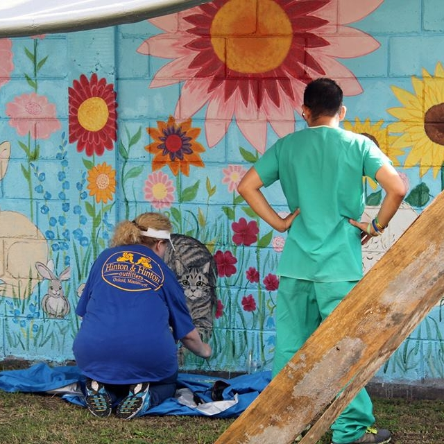 Working on the mural at the HBDM clinic