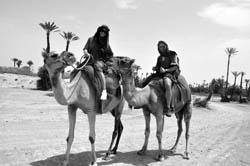 camelos-marrocos