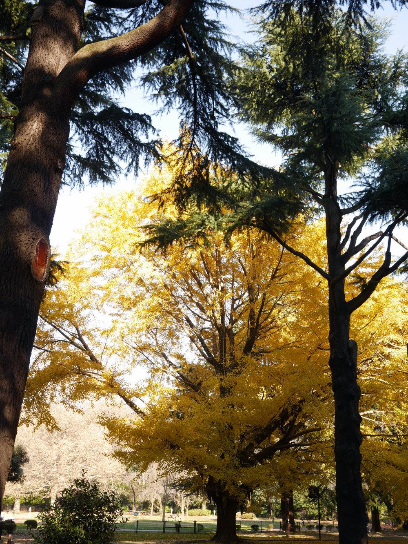 Para curtir umas horinhas de calma em meio a loucura da capital Japonesa caminhe até o parque pela da estação de Harajuku ou Shibuya.  O endereço é 2-1 Yoyogikamizonocho, Shibuya, Tóquio 151-0052