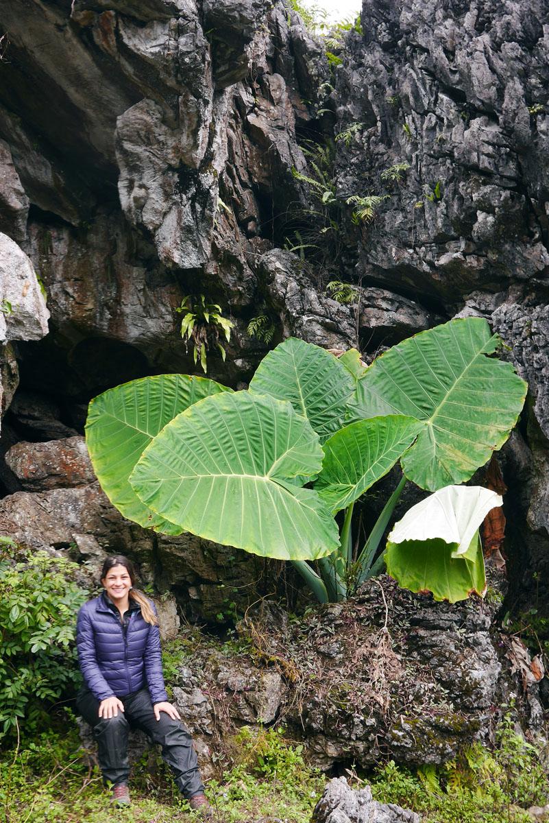 Não chegamos na caverna mas encontramos algumas plantas muito interessantes!