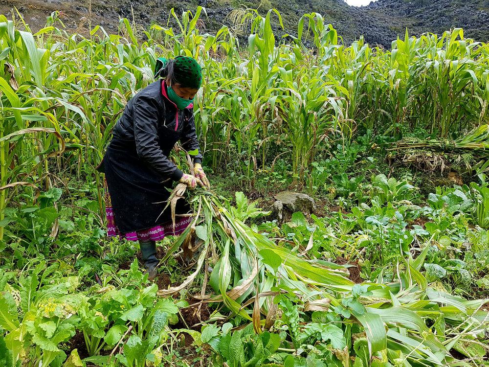 As mulheres são a força do Vietnam. Por onde passamos elas estão a plantar, colher e transportar pesadas cargas nas costas
