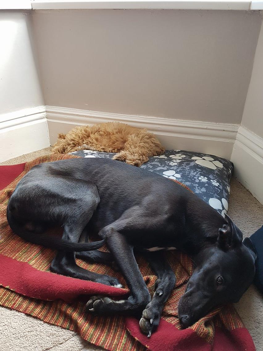George e Winston cansados depois de disputarem muito a bolinha :)