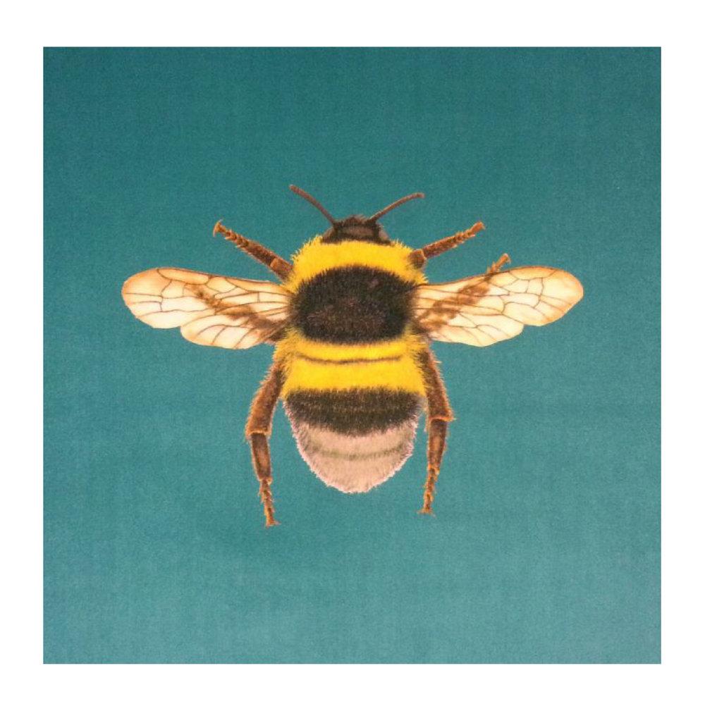 Bumblebee Turquoise - Velvet