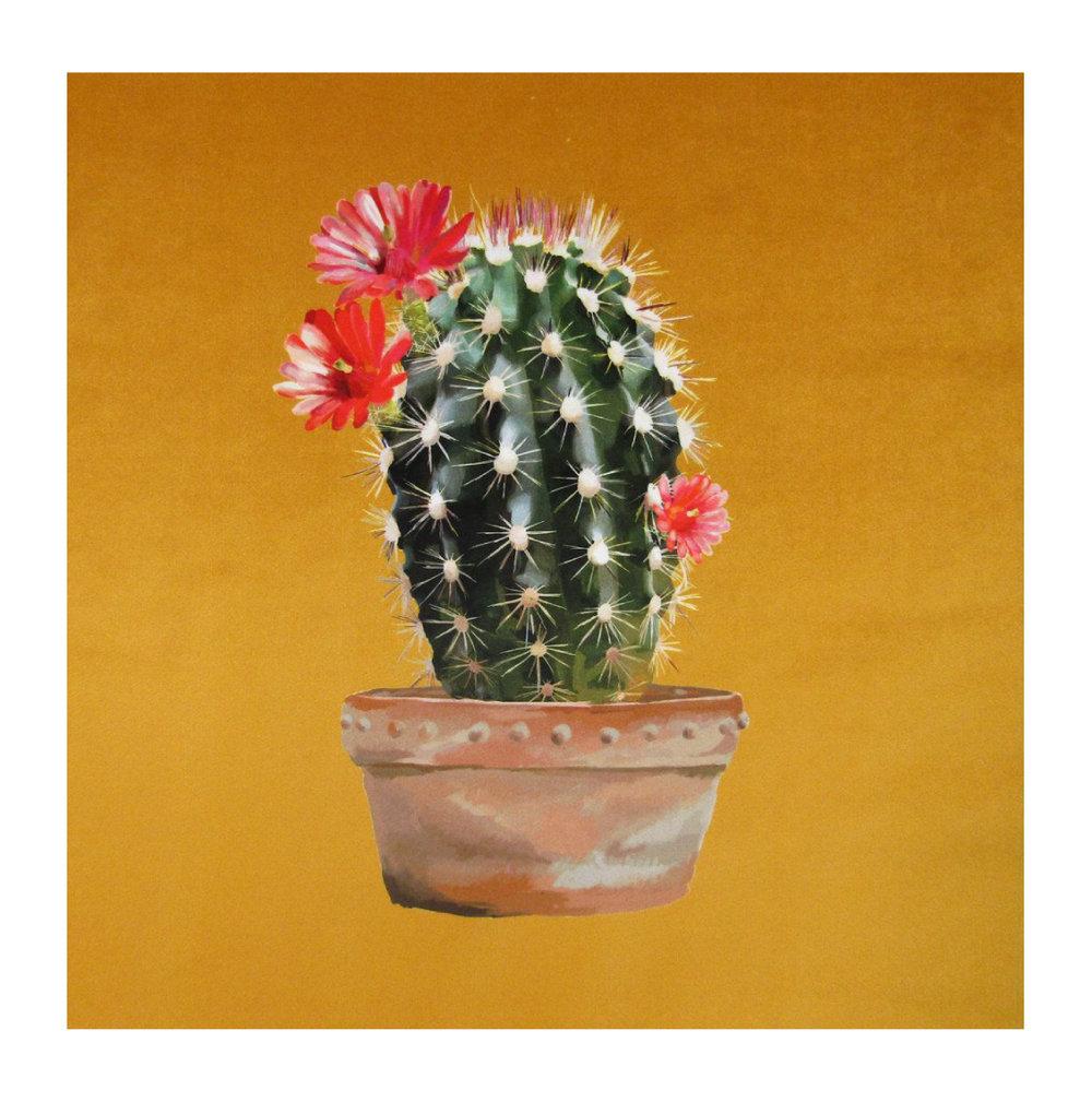 Cactus Gold - Velvet