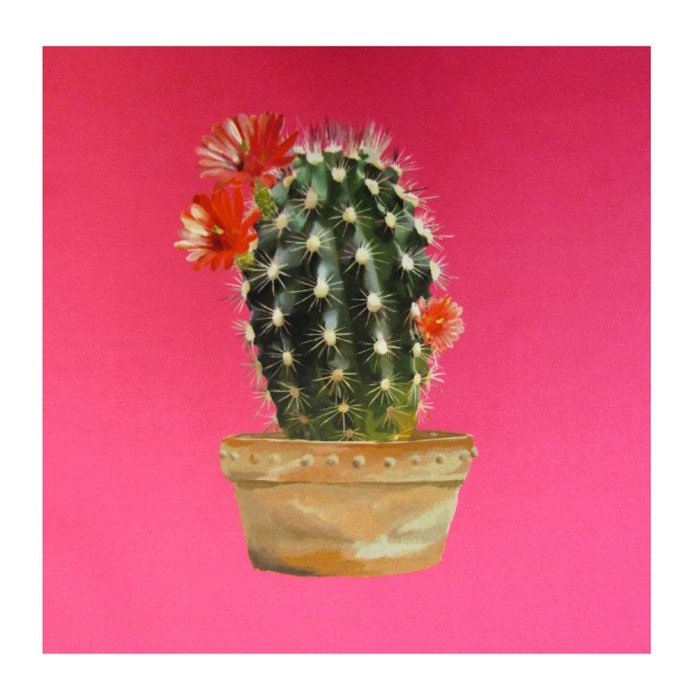 Cactus Sherbet - Velvet