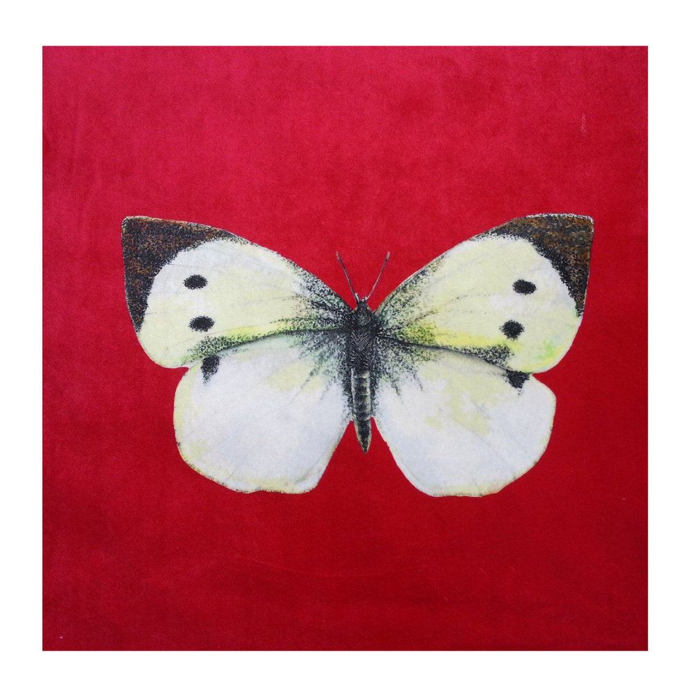 Butterfly (Cabbage White) Strawberry - Velvet
