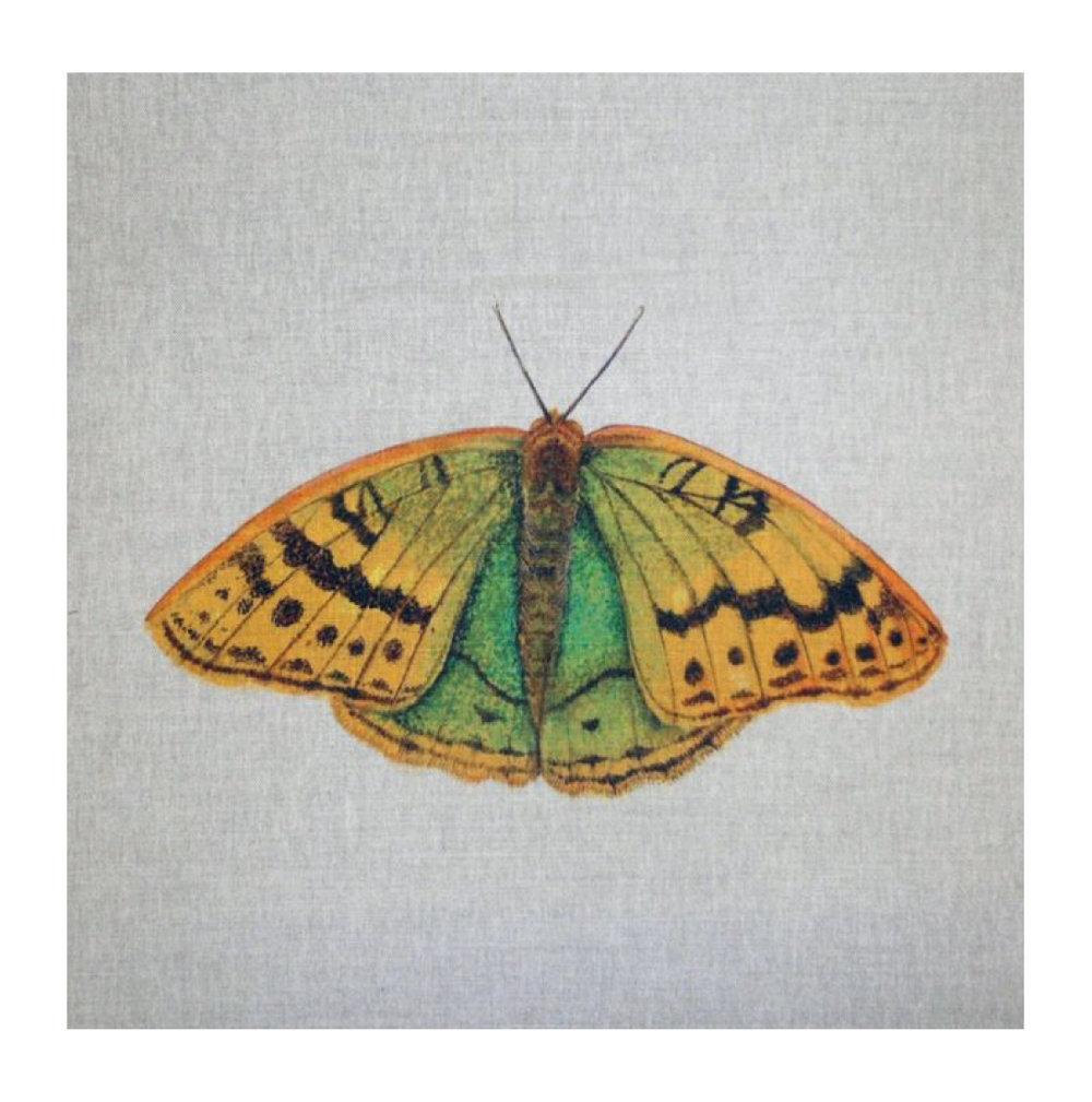 Butterfly (Cardinal) - Linen