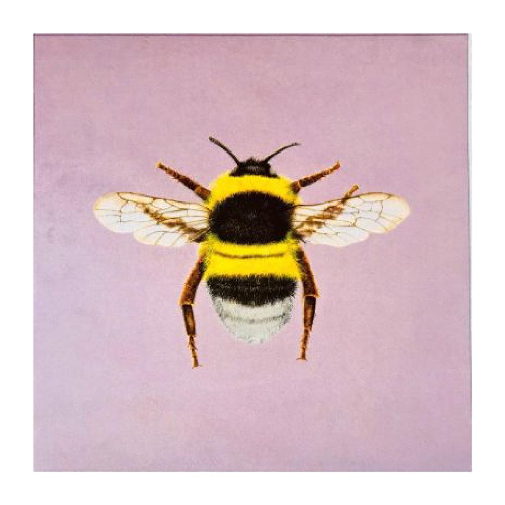 Bumblebee Blush - Velvet