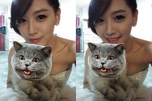 kpop-cats.jpg