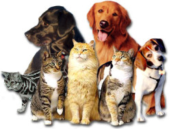 1296946662-cats_n_dogs.jpg