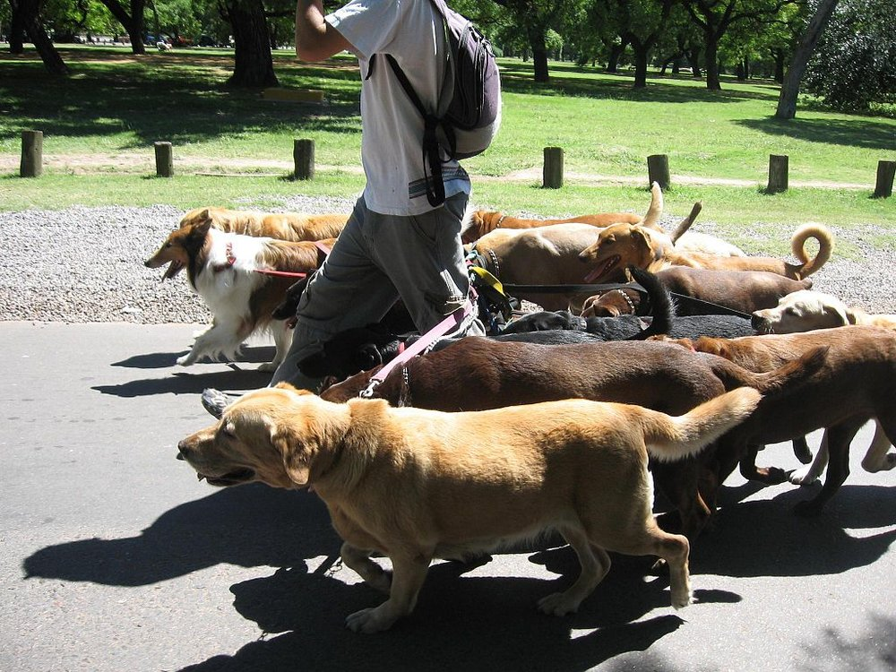 1024px-Dog_walker_-_Buenos_Aires.jpg